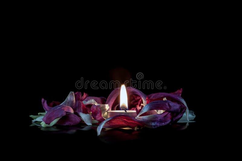 Свеча в цветках стоковая фотография rf