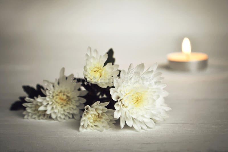 Свеча и белые цветки стоковое изображение
