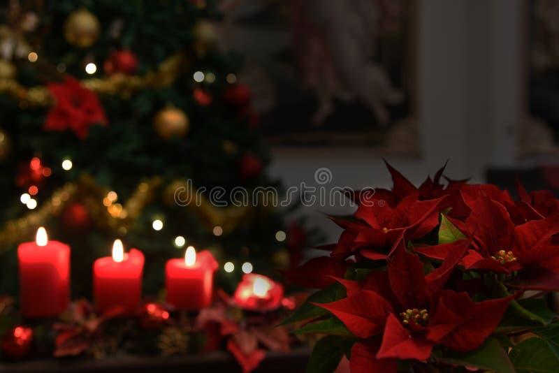 Свечи рождества, предпосылка рождественской елки стоковое изображение