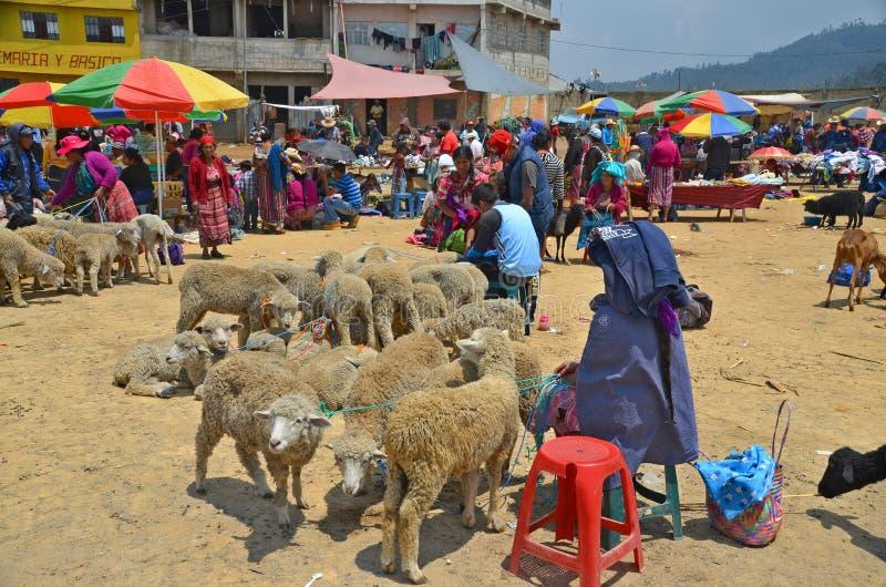 Свиньи продажи людей стоковое изображение