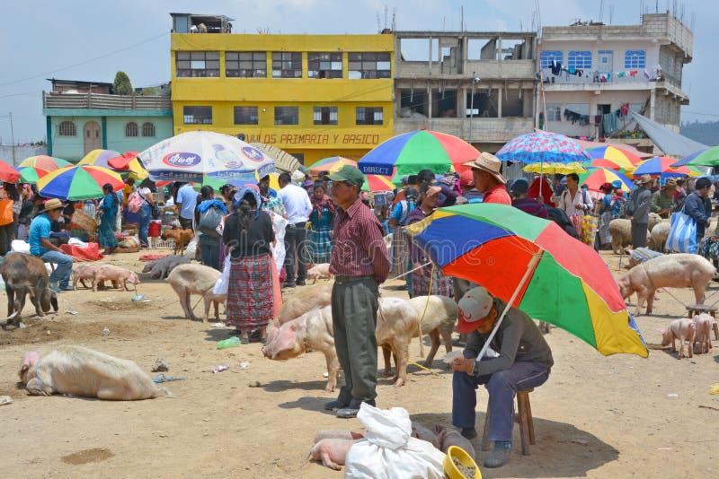 Свиньи продажи людей стоковая фотография rf