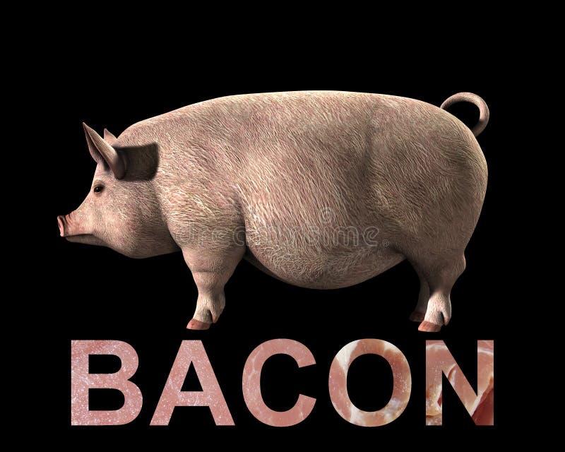 Свинья и бекон Стоковая Фотография RF