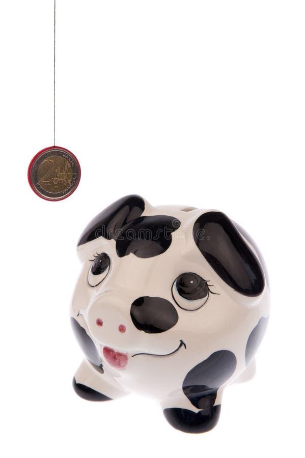 Свинья смотря до монетка евро стоковое фото