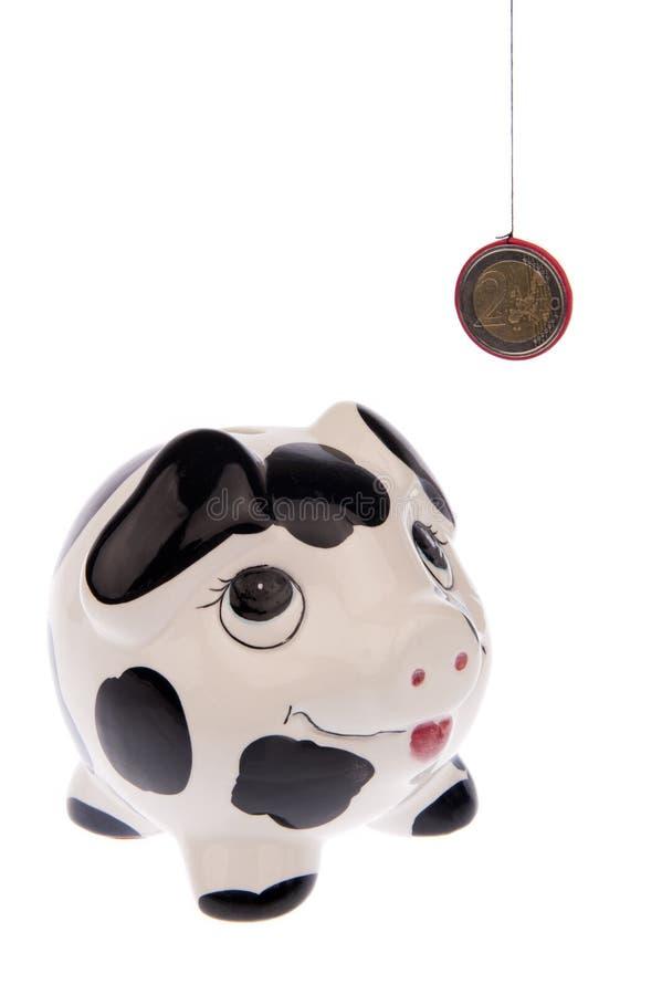 Свинья смотря до правильная позиция монетки евро стоковое фото