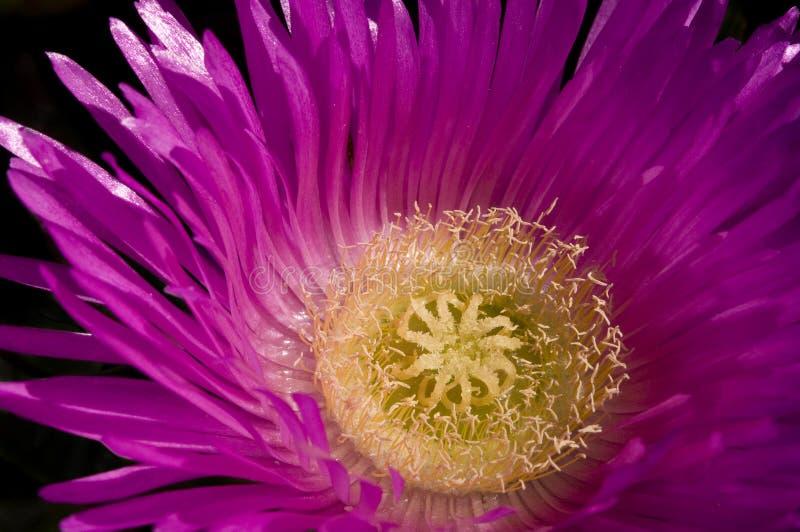 свинья цветка стороны стоковое изображение