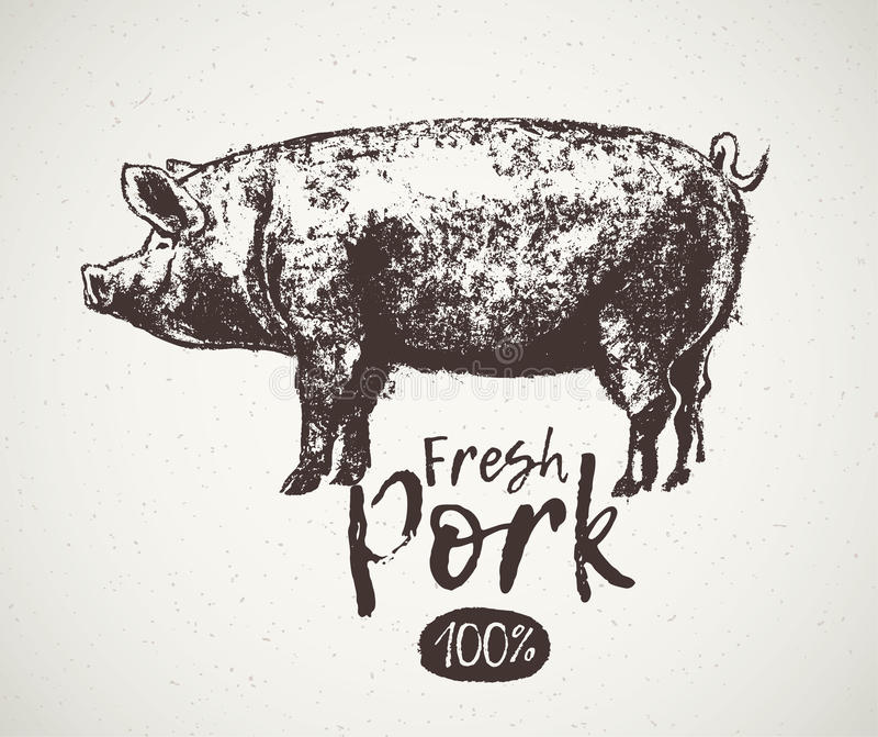 Свинья эскиза графическая иллюстрация штока