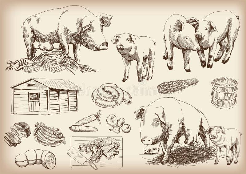 Свинь-размножение иллюстрация штока