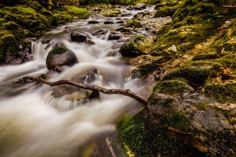 Свирепствуя поток в лесе Tollymore стоковые изображения