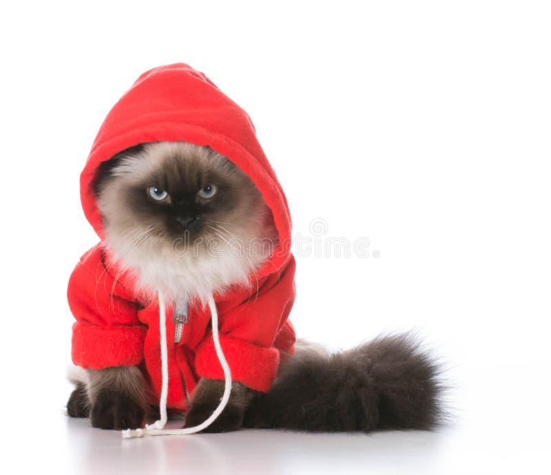 свитер кота нося стоковая фотография