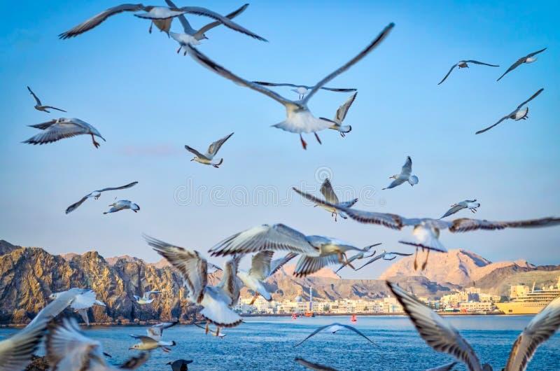 свобода летания к стоковые фото