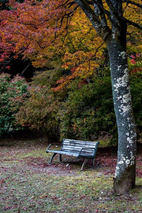 Свободное место и красочная предпосылка кленовых листов на спокойном саде стоковые фотографии rf