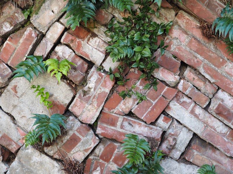 Свободно штабелированный фотоснимок предпосылки кирпичной стены сада стоковые изображения
