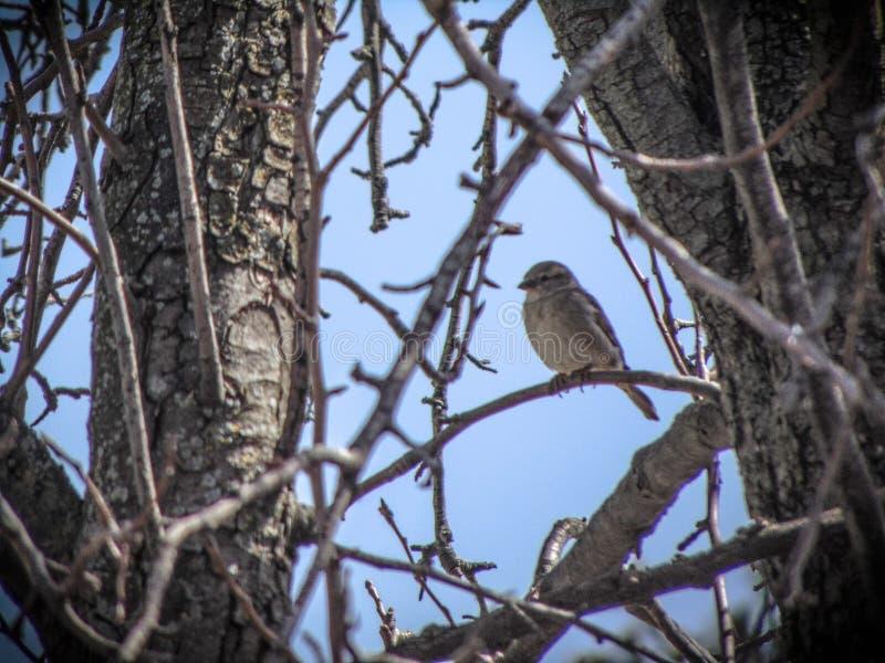 Свободный как птица стоковое фото rf