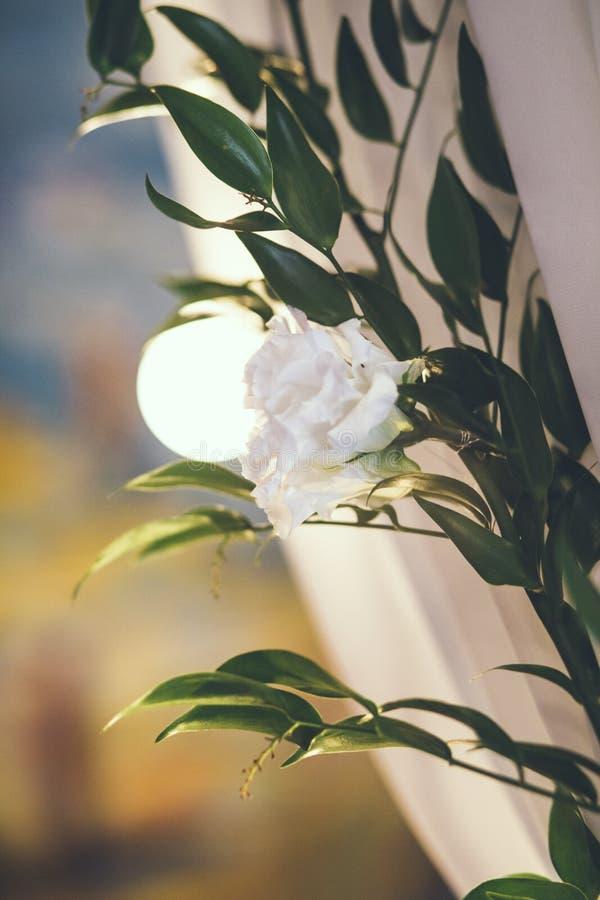 Свод свадьбы в студии с цветками стоковое фото rf