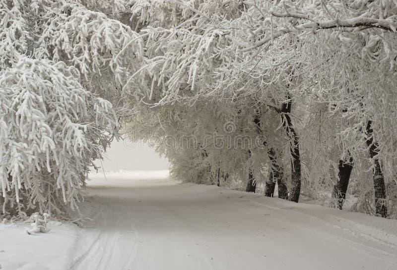 Свод снежных деревьев стоковые изображения