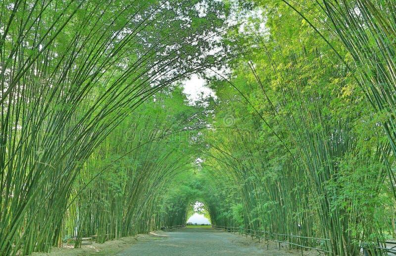 Свод тоннеля бамбуковый с дорожкой через лес в Таиланде стоковое изображение