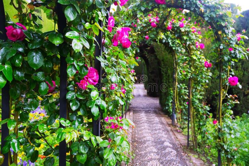 Своды с розами на саде Generalife granada стоковые изображения rf