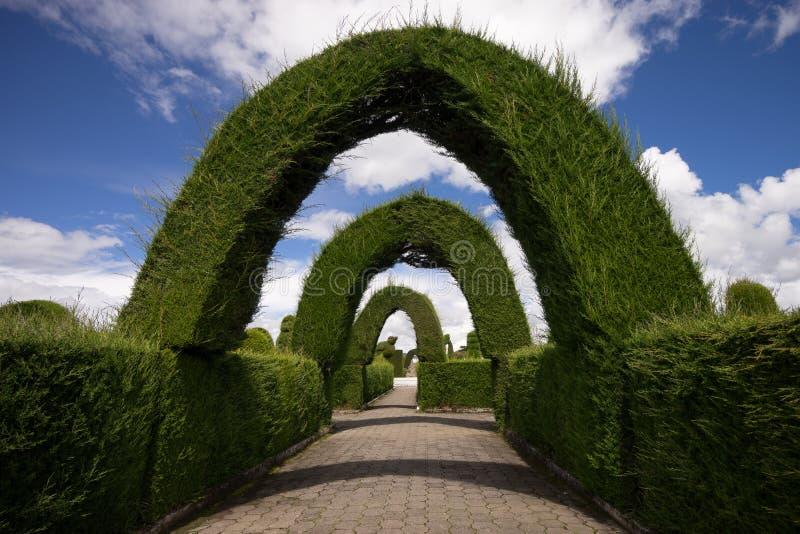 Своды Cypress в кладбище Tulcan стоковые фотографии rf
