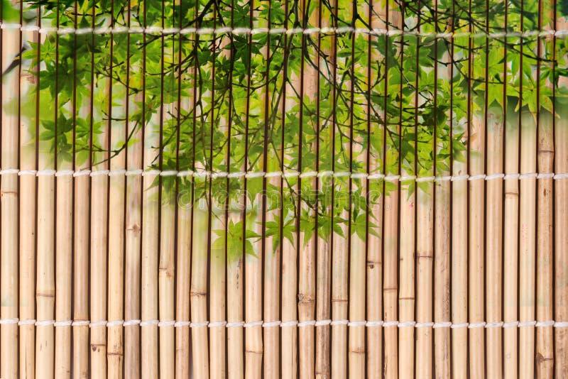 Связанный высушенного бамбука преследует картину в японском стиле стоковые изображения