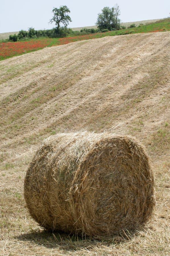 Связка сена на поле после сбора стоковое фото rf