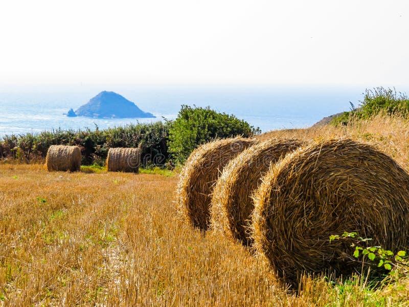 Связка сена соломы на поле после сбора стоковые фотографии rf