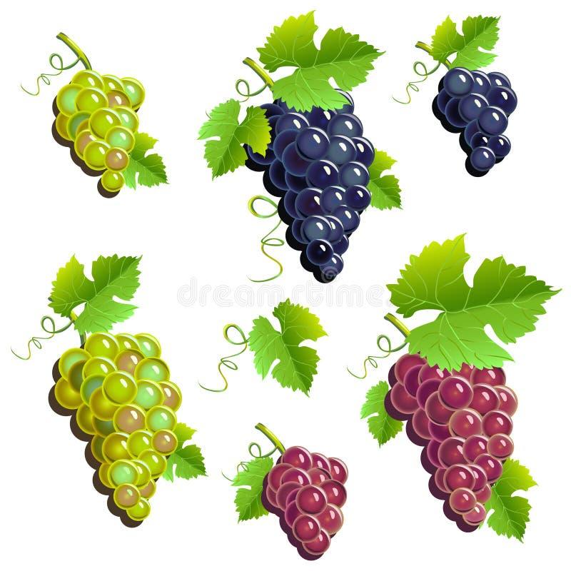 Связки винограда комплект иллюстрация вектора