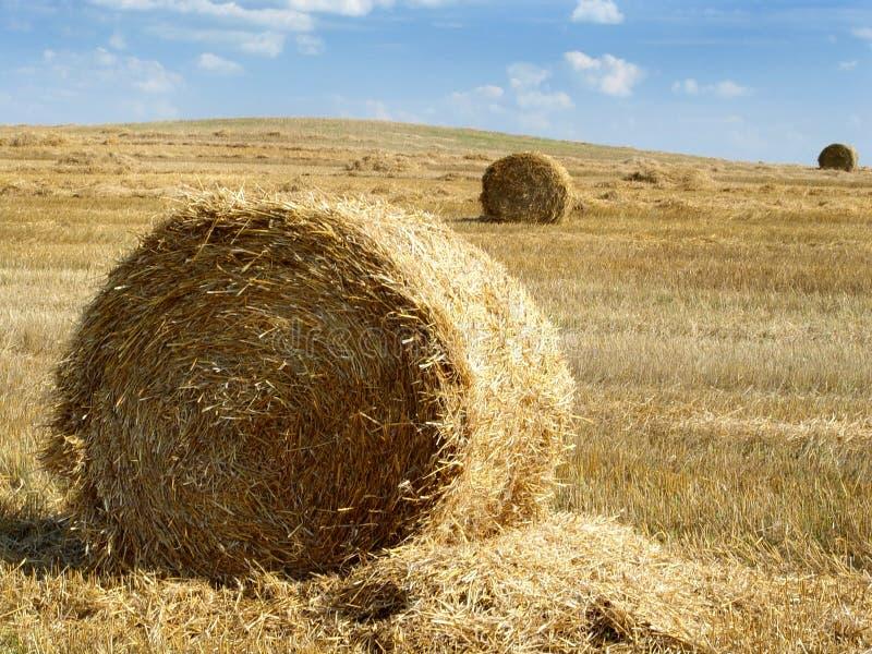 Связки сена в лете стоковые изображения
