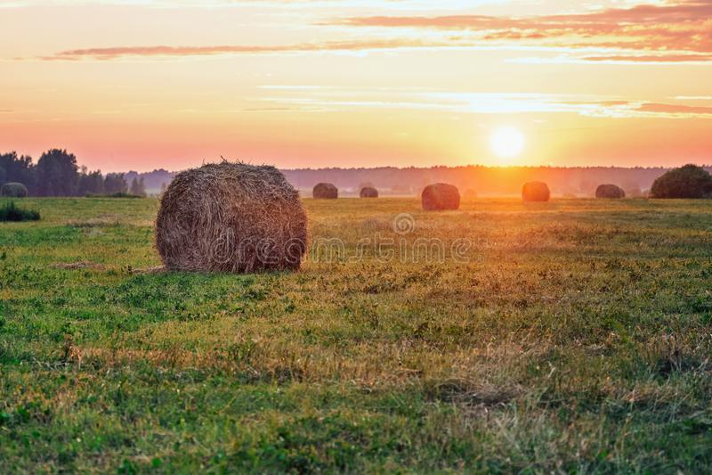 Связки сена в свете заходящего солнца в теплом вечере лета в сельской местности стоковые фотографии rf