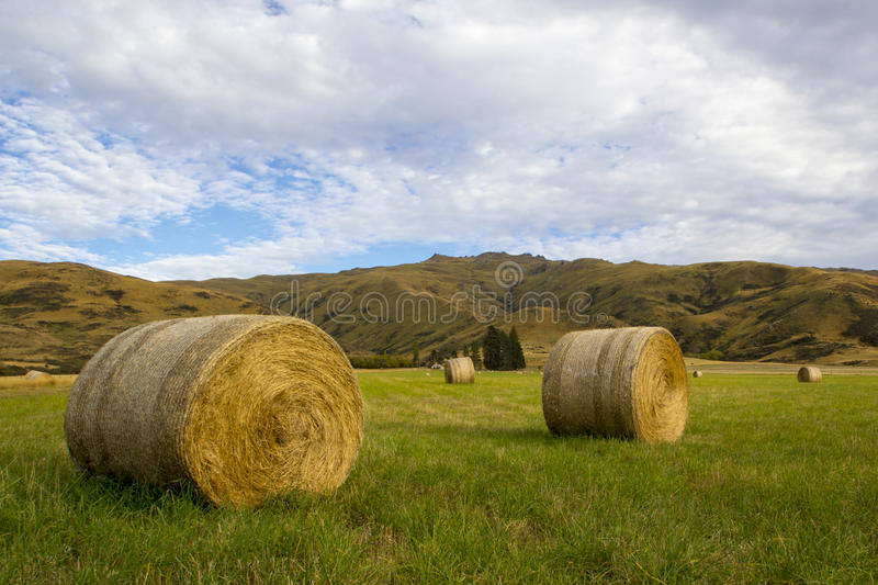 Связки сена в травянистом paddock, Otago, Новой Зеландии стоковые фотографии rf