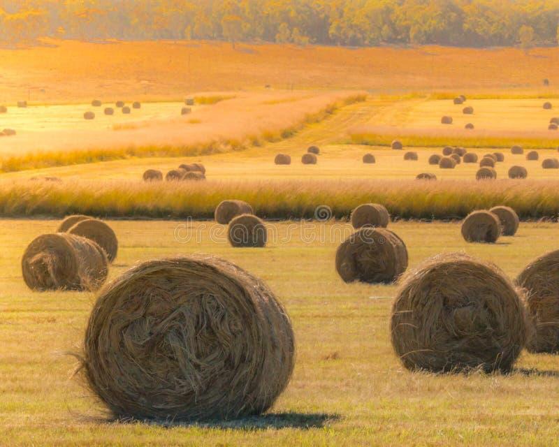 Связки сена на золотом поле на заходе солнца стоковые изображения