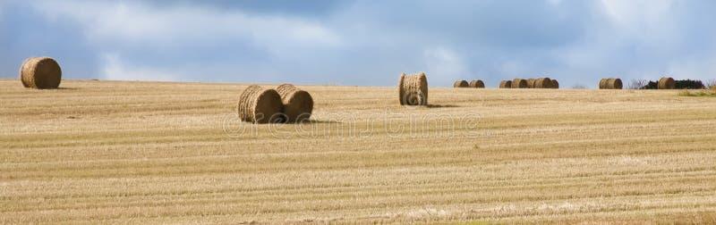 Связки сена на золотом поле стоковая фотография rf