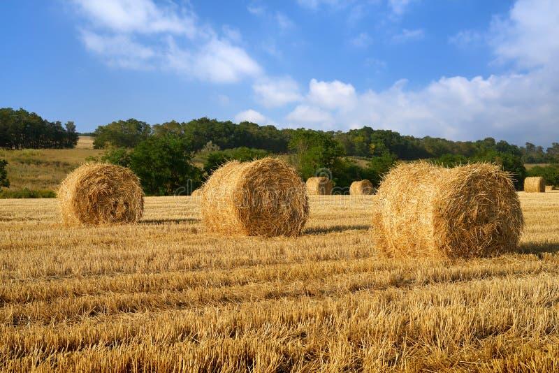 Связки сена на поле стоковое изображение rf