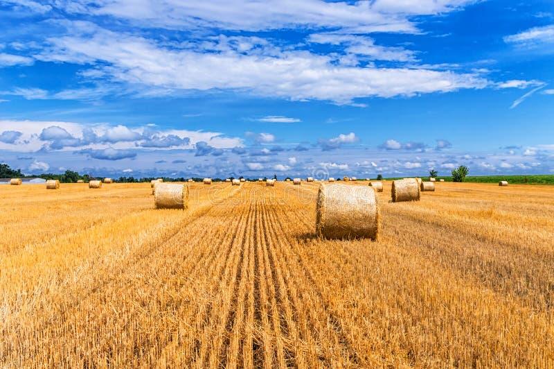 Связки сена на сжатом поле стоковое фото