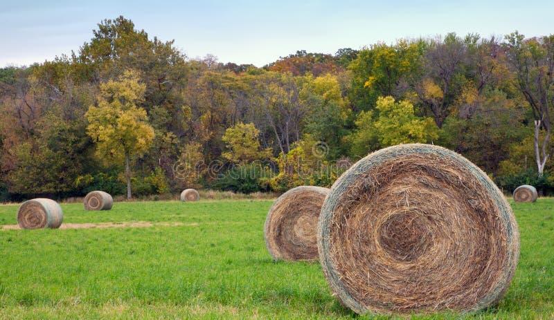 Связки сена стоковое изображение