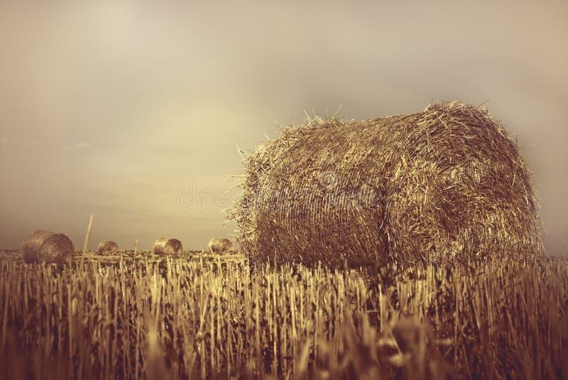 Связки сена стоковые изображения