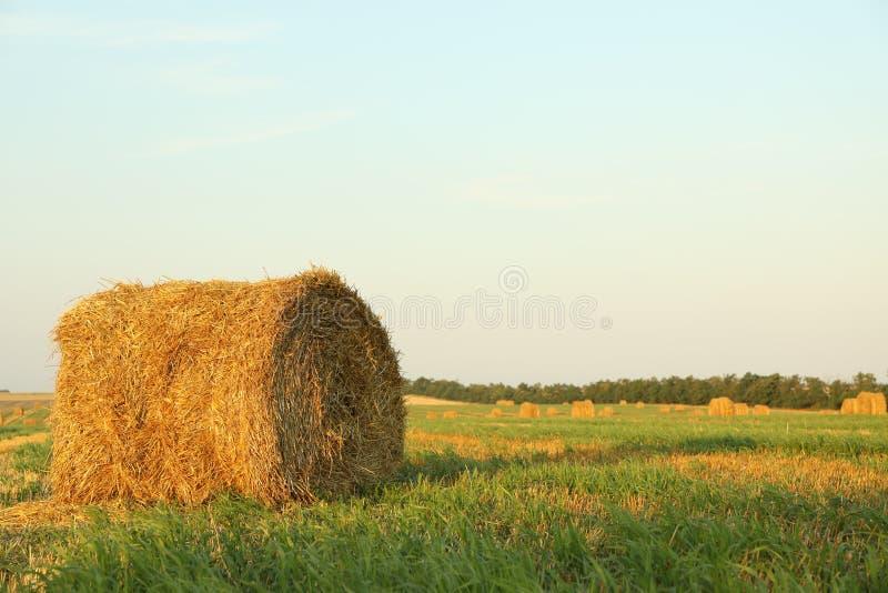 Связки соломы сена в поле стерни стоковое изображение rf