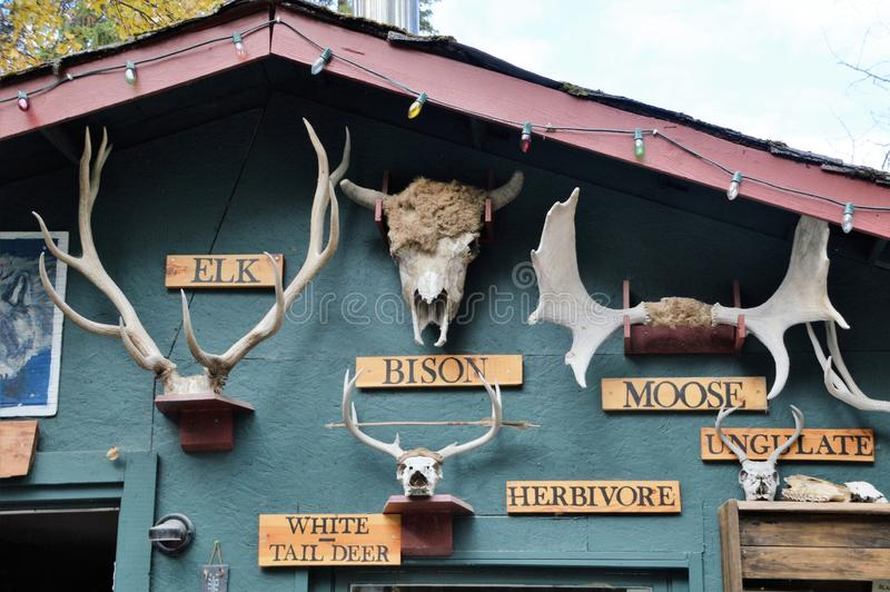 Святилище золотого, Канада волка стоковая фотография rf