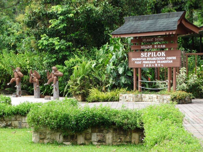 Святилище орангутана животное в Sepilok, Малайзии стоковые изображения