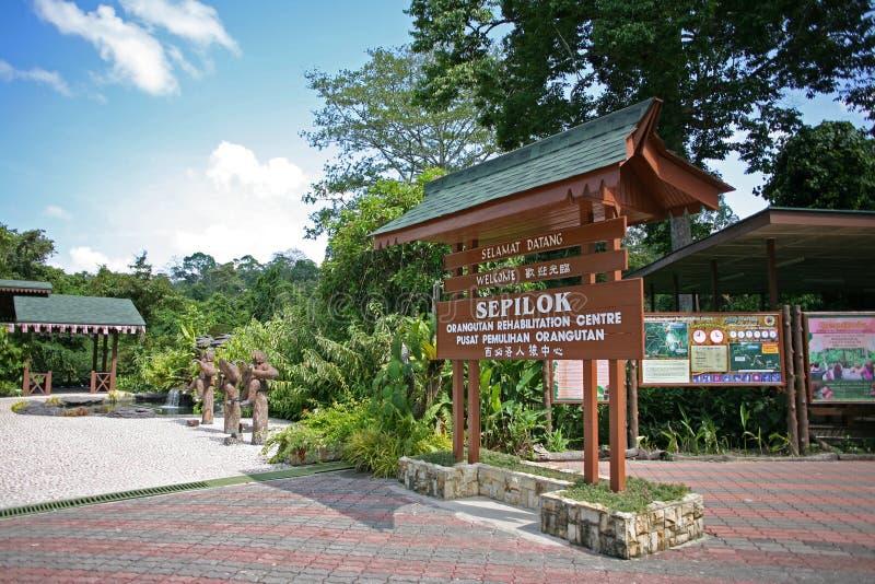 Святилище орангутана животное в Sepilok стоковое изображение rf