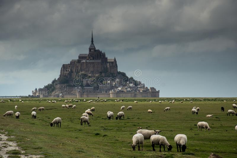 Святой Мишель Mont во время rainny и пасмурного с овцами ест траву стоковые изображения