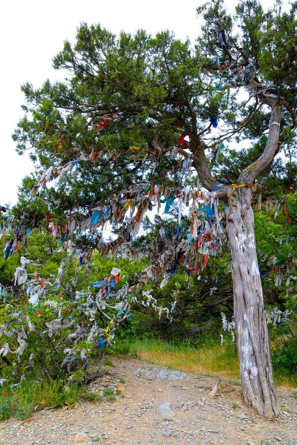 Священное желая дерево можжевельника желаний и мечт стоковые фотографии rf