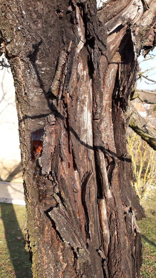 Сгорели дерево, который стоковое фото