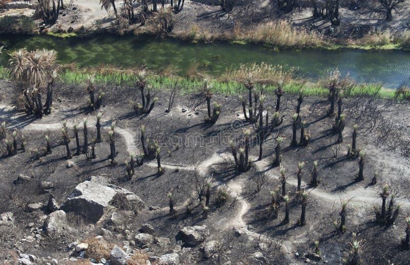 сгорели пляжем, котор валы preveli ладони стоковые изображения rf