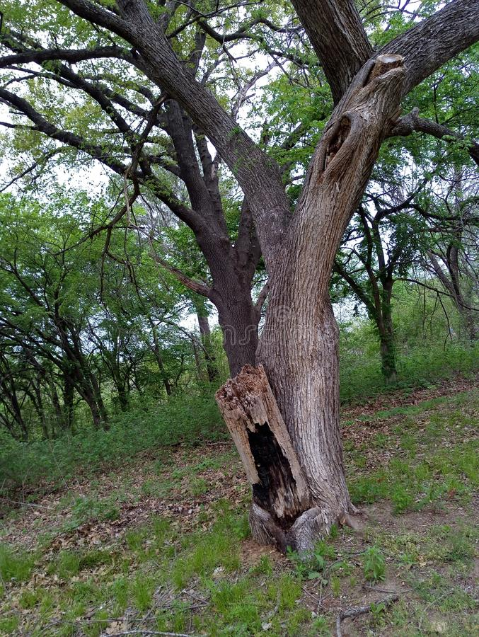 Сгорели пятно на дереве стоковое фото rf