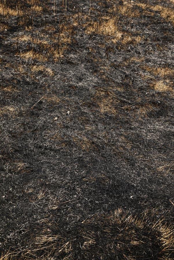 Сгоренный вне field стоковое фото