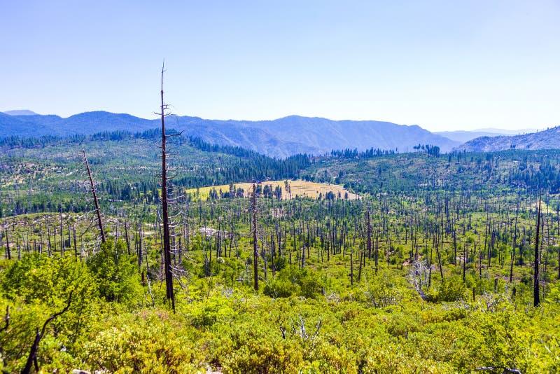 Сгоренный вниз с леса в Yosemite стоковое фото rf