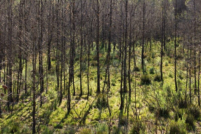 Download Сгорели лес стоковое изображение. изображение насчитывающей reborn - 33726885