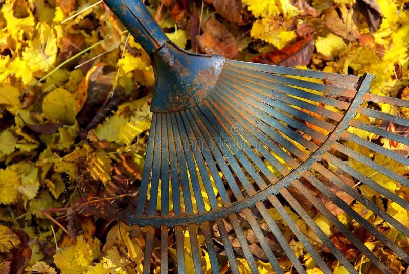 сгребалка 04 листьев стоковое изображение rf