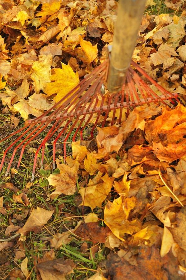 Сгребать листья стоковая фотография rf