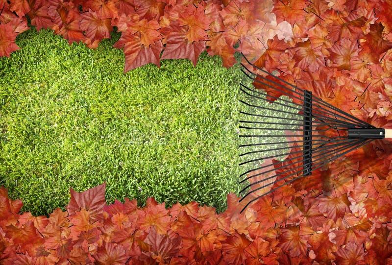 сгребать листьев стоковое изображение
